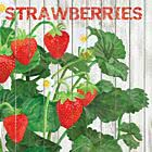 Servietten Harvest Strawberries 33 x 33 cm ppd 1332394